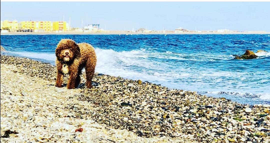 Photo of La Playa de la Rana cuenta ya con la oficialidad de la Junta para que la entrada de los canes esté totalmente permitida