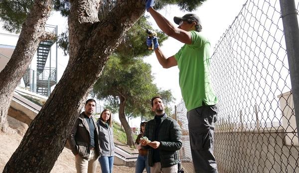 Photo of El Ayuntamiento refuerza el tratamiento contra la procesionaria con endoterapia, un método respetuoso con el medioambiente