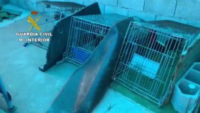 """Photo of La Guardia Civil frustra una """"pelea de gallos"""" clandestina en Adra a la que asistían 16 personas durante el estado de alarma"""
