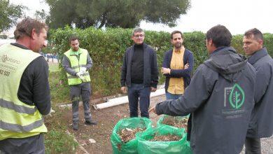 Photo of Luz verde a la licitación de poda de árboles y palmeras y mantenimiento de jardines