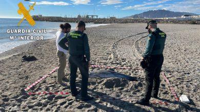 Photo of La Guardia Civil presta seguridad y apoyo a los técnicos de Equinac en dos varamientos de delfines en el litoral de Almería
