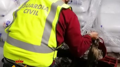Photo of La Guardia Civil interviene 100 Kg de pulpo que no se presentó en lonja para su venta