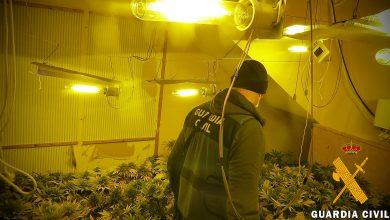 Photo of La Guardia Civil detiene a tres personas e investiga a otra por cultivar marihuana en sus domicilios en Adra