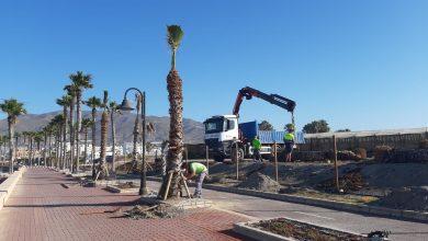 Photo of Plantación de una quincena de palmeras en el Paseo Marítimo del Censo de Adra