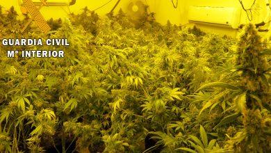 Photo of La Guardia Civil detiene a cuatro personas y desmantela varios cultivos indoor de marihuana en Adra