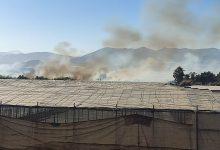 Photo of Incendio forestal en el Paraje Natural de Las Albuferas