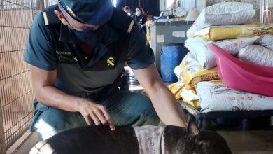 Photo of La Guardia Civil investiga al autor de un delito de maltrato animal y rescata a un perro en pésimas condiciones higiénico – sanitarias